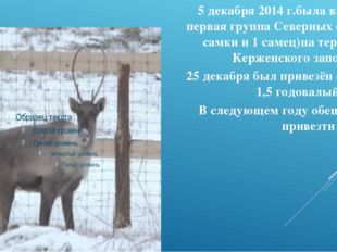 5 декабря 2014 г.была выпущена первая группа Северных оленей (3 самки и 1 сам