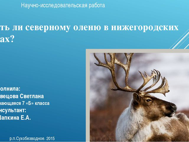 Быть ли северному оленю в нижегородских лесах? Научно-исследовательская работ...