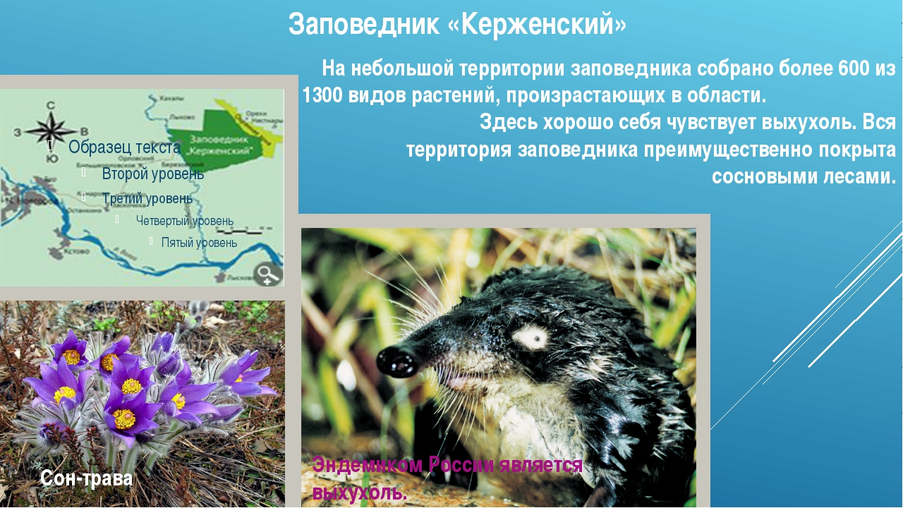 Заповедник «Керженский» На небольшой территории заповедника собрано более 600...