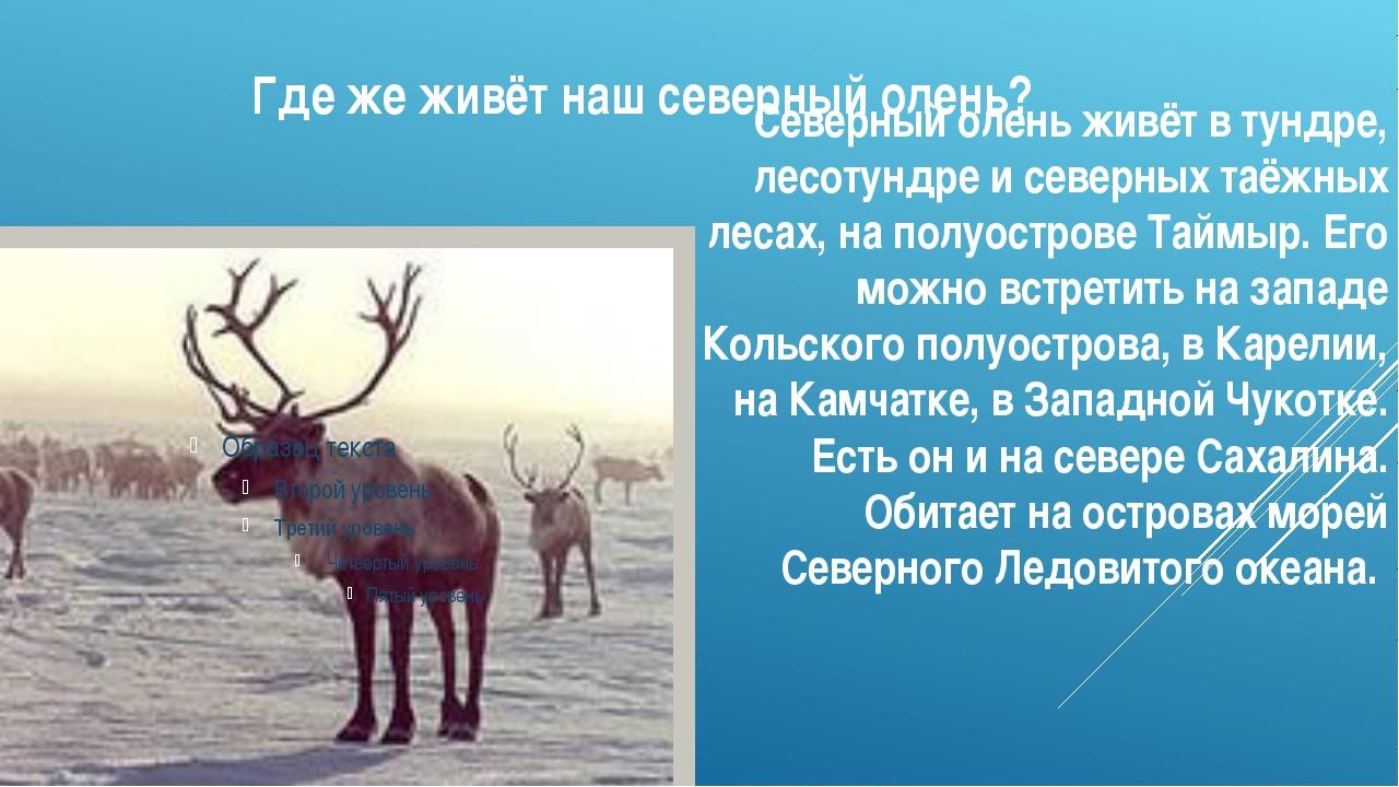 Где же живёт наш северный олень? Северный олень живёт в тундре, лесотундре и...