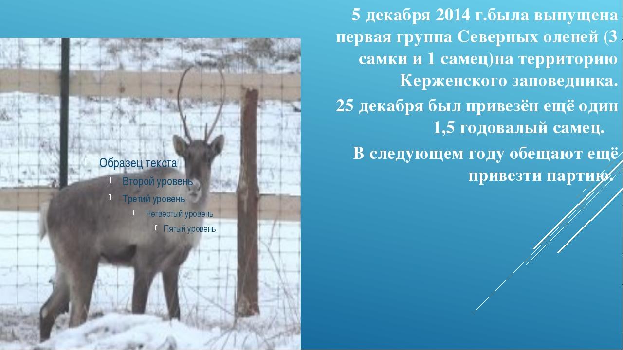5 декабря 2014 г.была выпущена первая группа Северных оленей (3 самки и 1 сам...