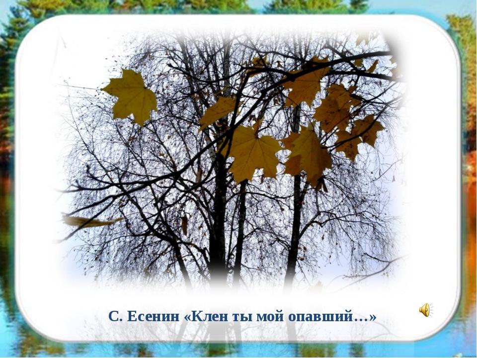 С. Есенин «Клен ты мой опавший…»