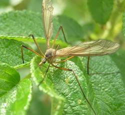 http://entomolog.info/images/stories/04/image018.jpg