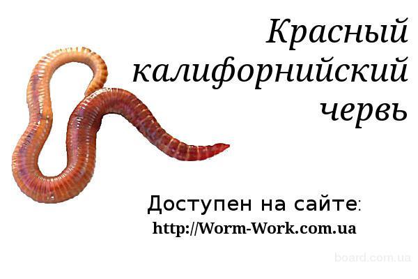 http://img2.board.com.ua/a/2000594175/wm/1-krasnyij-kalifornijskij-cherv.jpg