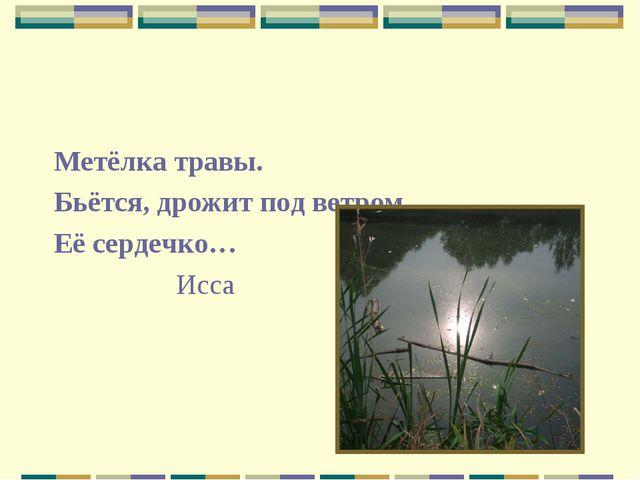 Метёлка травы. Бьётся, дрожит под ветром Её сердечко… Исса