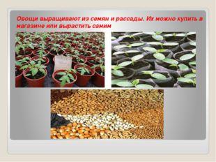 Овощи выращивают из семян и рассады. Их можно купить в магазине или вырастит