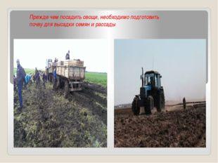 Прежде чем посадить овощи, необходимо подготовить почву для высадки семян и