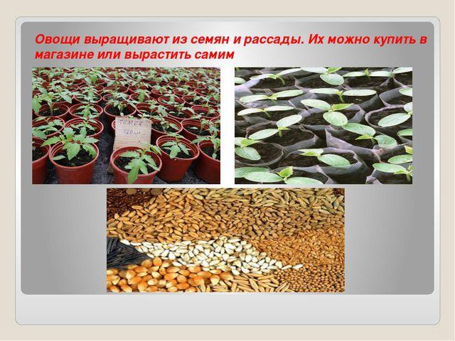 Овощи выращивают из семян и рассады. Их можно купить в магазине или вырастит...