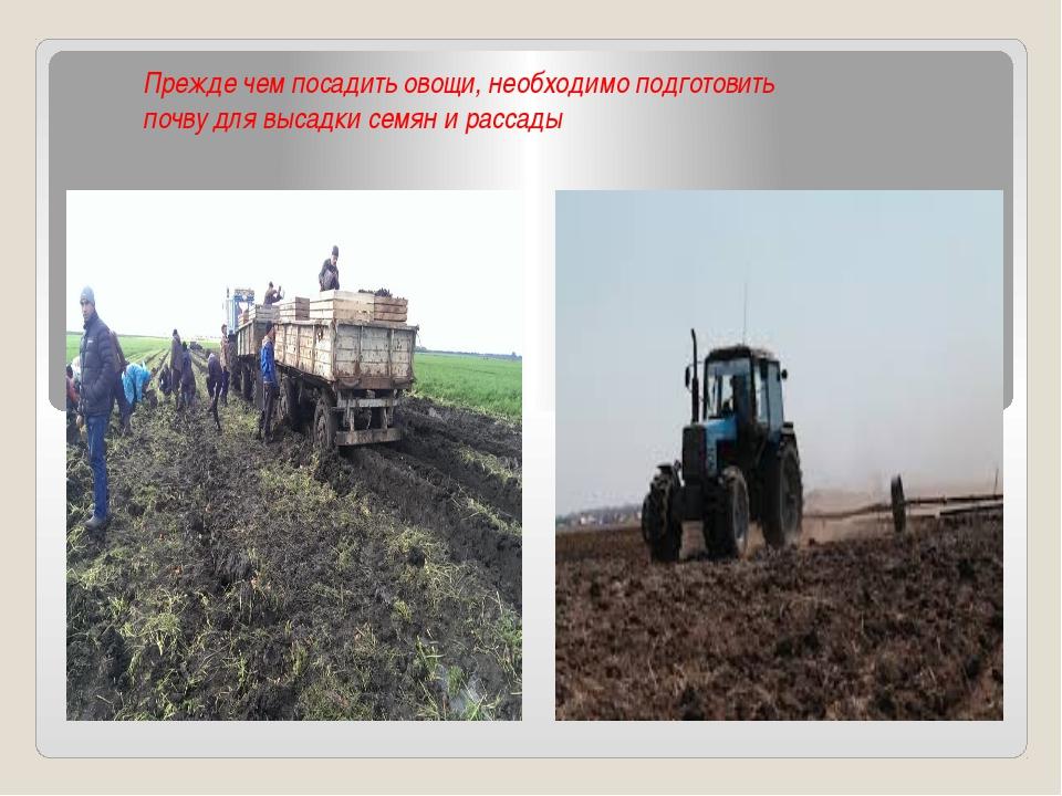 Прежде чем посадить овощи, необходимо подготовить почву для высадки семян и...