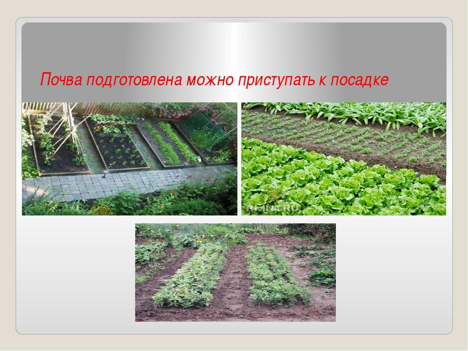 Почва подготовлена можно приступать к посадке