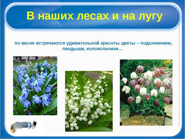 В наших лесах и на лугу по весне встречаются удивительной красоты цветы – под...