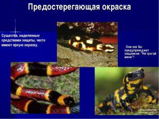 """Предостерегающая окраска Они как бы предупреждают хищников: """"Не трогай меня""""!"""