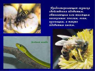 Предостерегающая окраска свойственна ядовитым, обжигающим или жалящим насеко