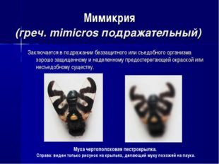 Мимикрия (греч. mimicros подражательный) Заключается в подражании беззащитног