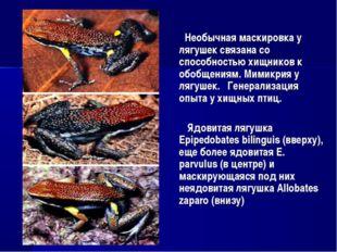 Необычная маскировка у лягушек связана со способностью хищников к обобщениям