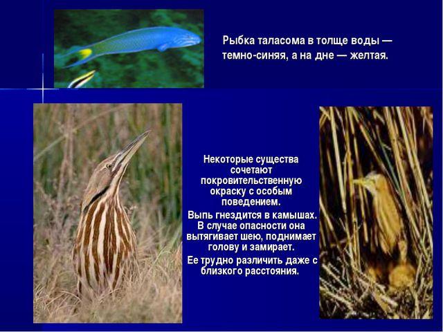 Рыбка таласома в толще воды — темно-синяя, а на дне — желтая. Некоторые сущес...