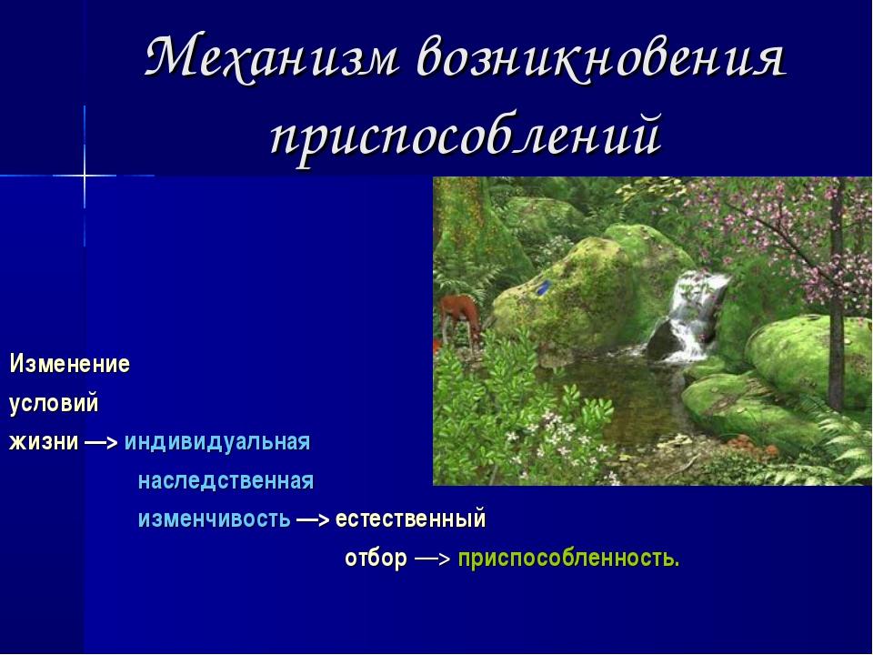 Механизм возникновения приспособлений Изменение условий жизни ––> индивидуаль...