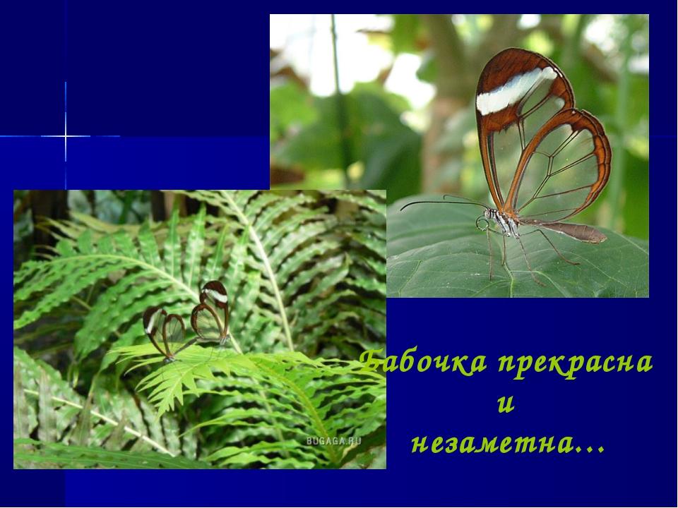 Бабочка прекрасна и незаметна…