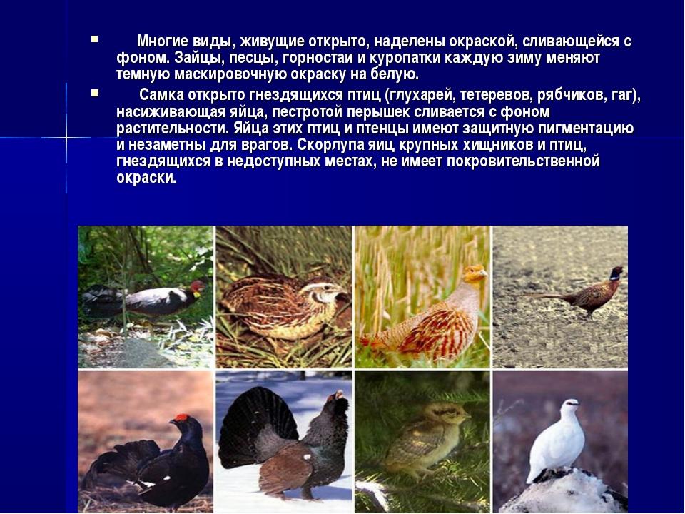 Многие виды, живущие открыто, наделены окраской, сливающейся с фоном. Зайцы,...