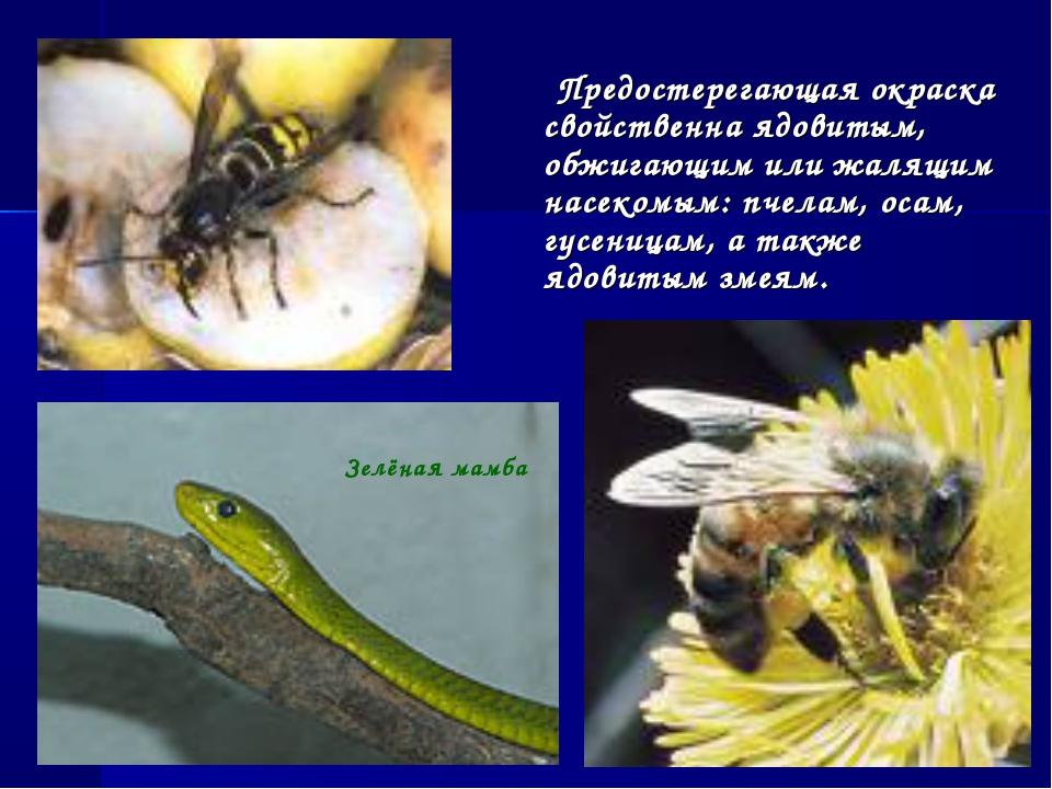 Предостерегающая окраска свойственна ядовитым, обжигающим или жалящим насеко...
