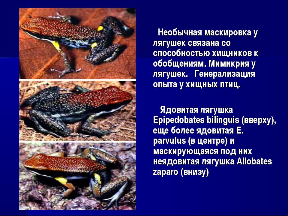 Необычная маскировка у лягушек связана со способностью хищников к обобщениям...