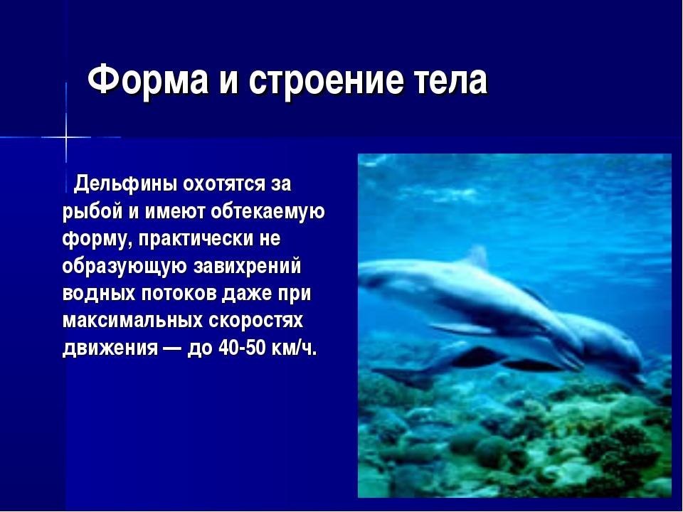 Форма и строение тела Дельфины охотятся за рыбой и имеют обтекаемую форму, пр...