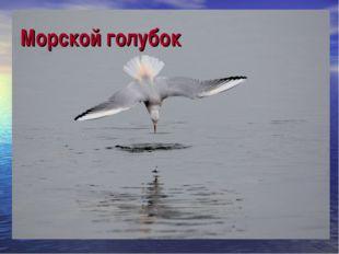 Морской голубок