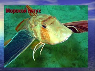Морской петух