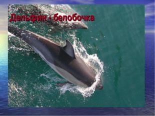 Дельфин - белобочка