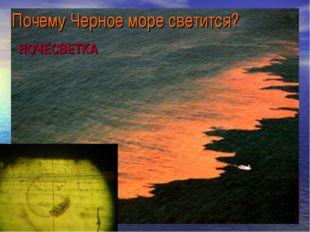 Почему Черное море светится? НОЧЕСВЕТКА