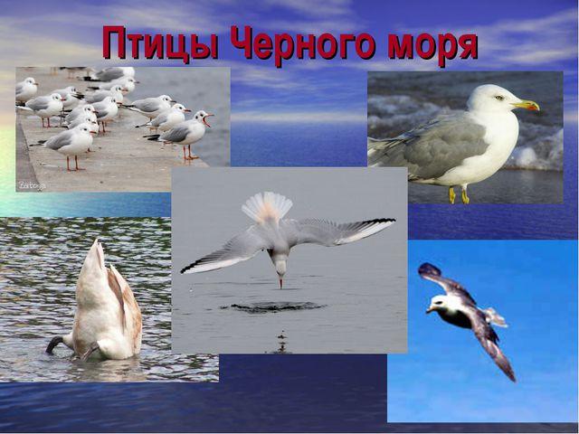 Птицы Черного моря