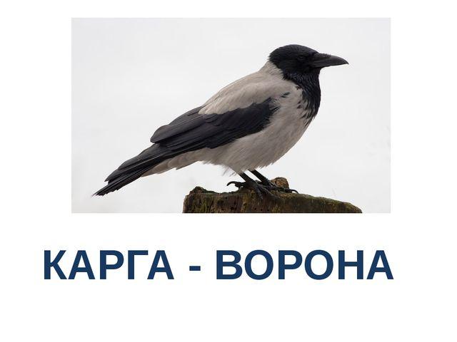КАРГА - ВОРОНА