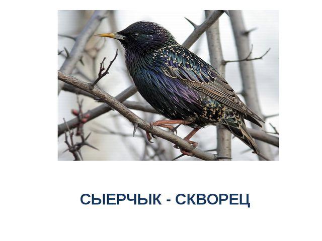 СЫЕРЧЫК - СКВОРЕЦ