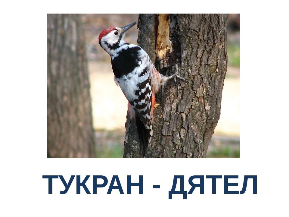 ТУКРАН - ДЯТЕЛ