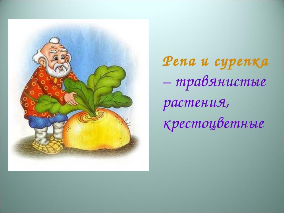 Репа и сурепка – травянистые растения, крестоцветные