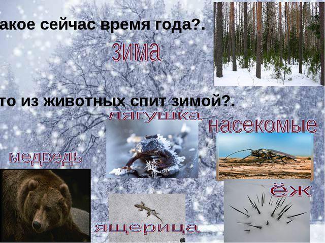 Какое сейчас время года?. Кто из животных спит зимой?.