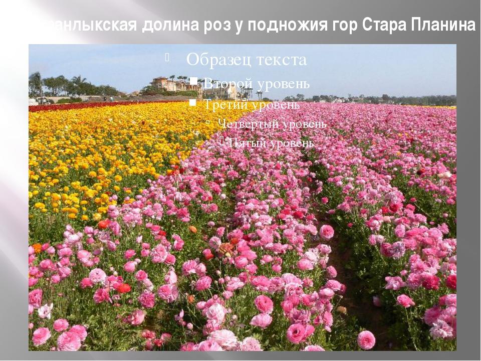 Казанлыкская долина роз у подножия гор Стара Планина