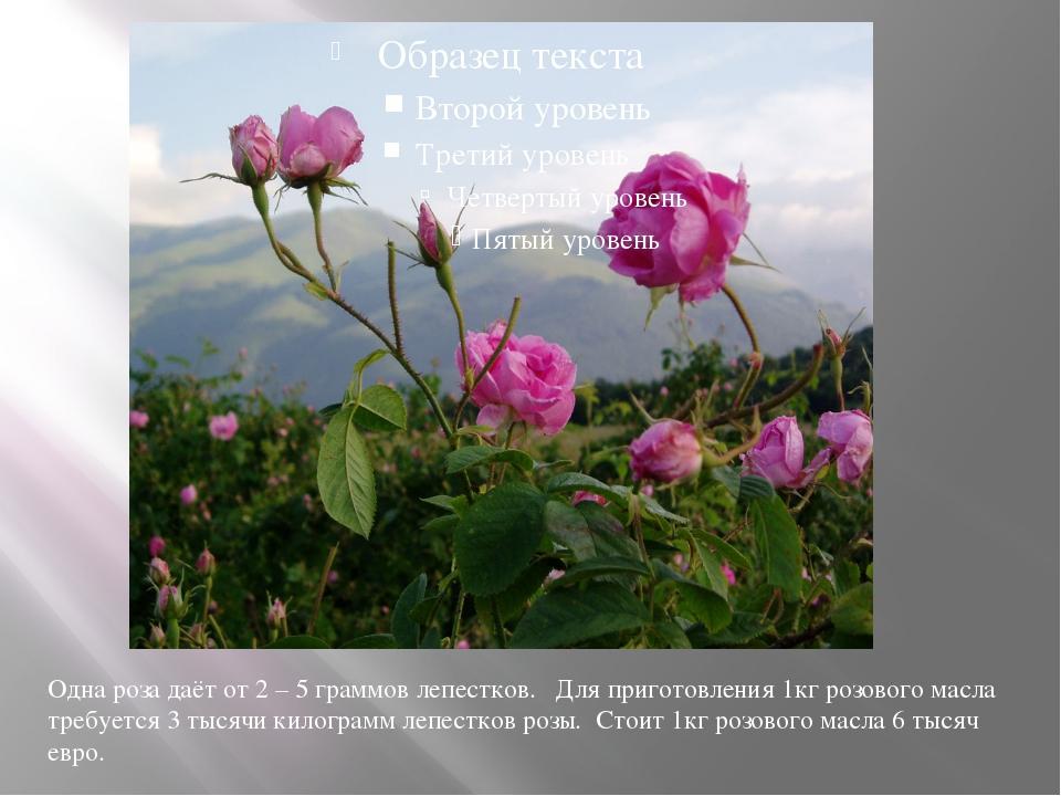 Одна роза даёт от 2 – 5 граммов лепестков. Для приготовления 1кг розового ма...