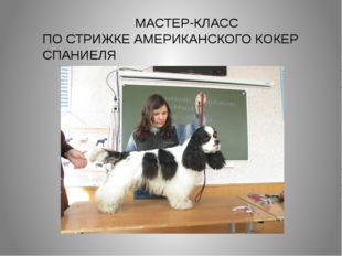 МАСТЕР-КЛАСС ПО СТРИЖКЕ АМЕРИКАНСКОГО КОКЕР СПАНИЕЛЯ