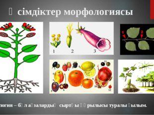 Морфология – бұл ағзалардың сыртқы құрылысы туралы ғылым. Өсімдіктер морфолог