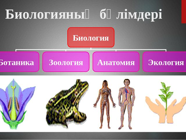 Биологияның бөлімдері Биология Ботаника Зоология Анатомия Экология