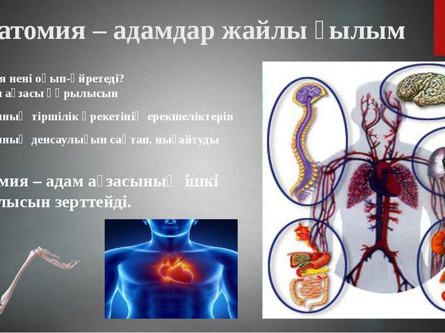 Анатомия – адамдар жайлы ғылым Анатомия нені оқып-үйретеді? Адам ағзасы құрыл...