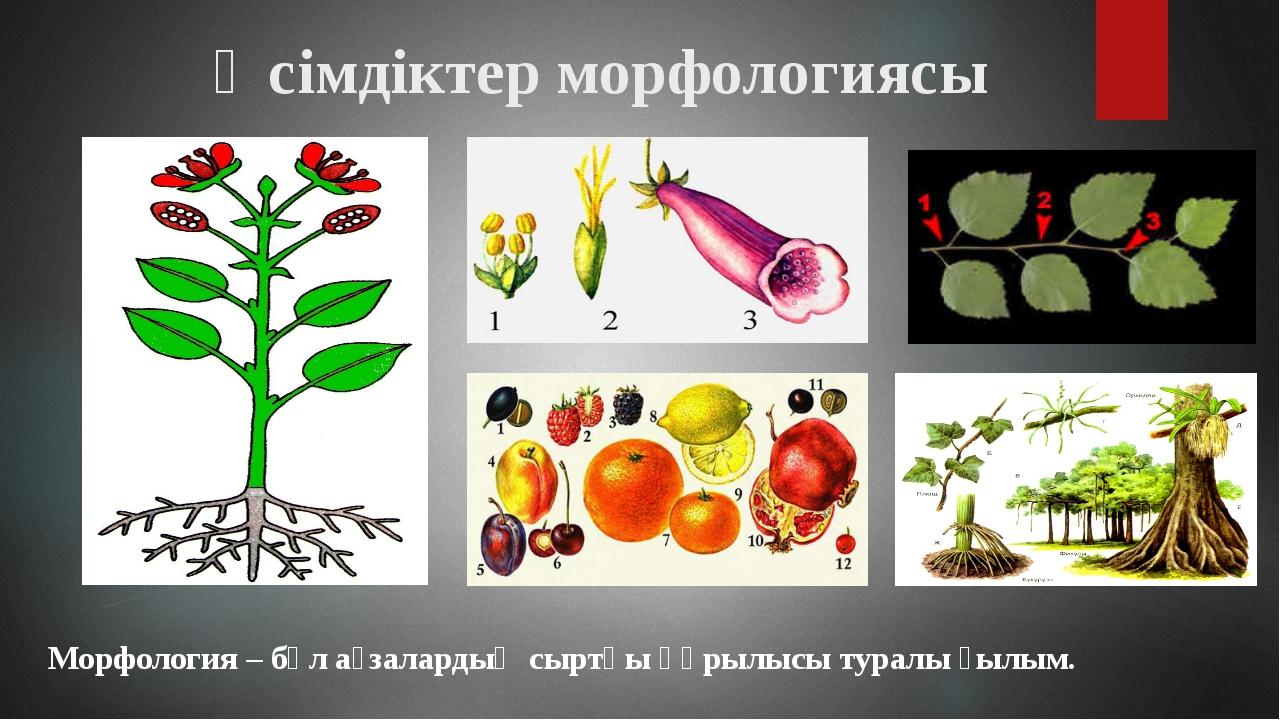 Морфология – бұл ағзалардың сыртқы құрылысы туралы ғылым. Өсімдіктер морфолог...