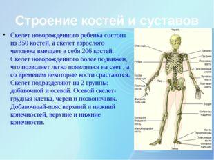 Строение костей и суставов Скелет новорожденного ребенка состоит из 350 косте