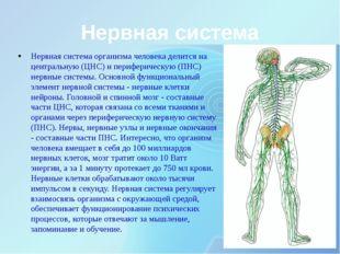 Нервная система Нервная система организма человека делится на центральную (ЦН