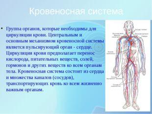Кровеносная система Группа органов, которые необходимы для циркуляции крови.
