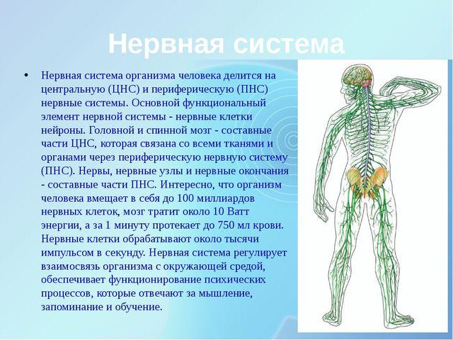 Нервная система Нервная система организма человека делится на центральную (ЦН...