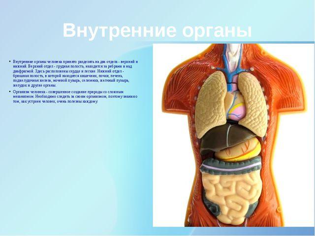 Внутренние органы Внутренние органы человека принято разделять на два отдела...