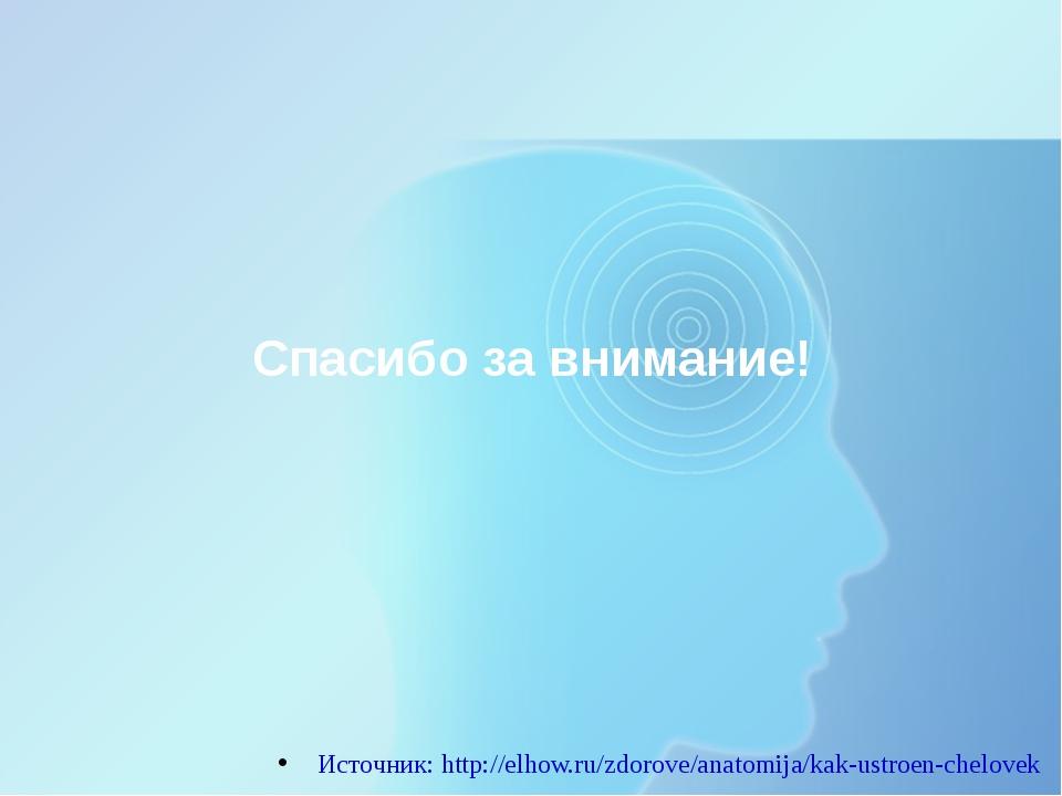 Спасибо за внимание! Источник: http://elhow.ru/zdorove/anatomija/kak-ustroen-...