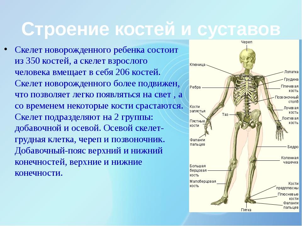 Строение костей и суставов Скелет новорожденного ребенка состоит из 350 косте...